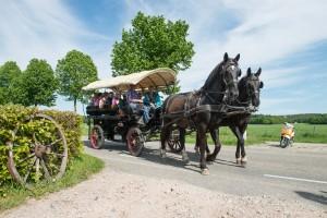 koetsieren paard uitje montferland gelderland
