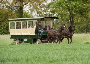 Huifkar paard montferland gelderland